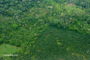Rainforest Fund Comments to the World Bank on the Revised Economic and Social Framework